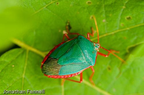 Turquoise macro beatle bug