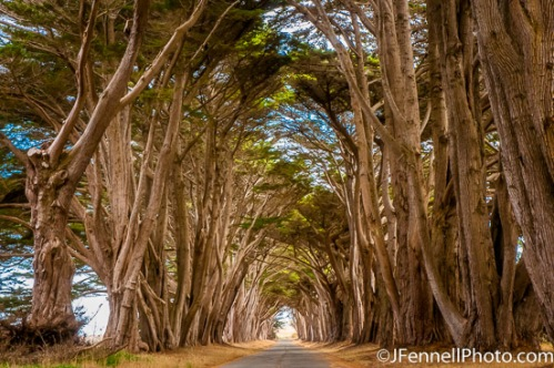 Cypress Tunnel in Point Reyes.